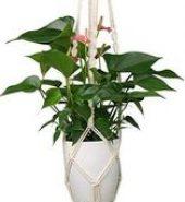 Flower Tub Hanger